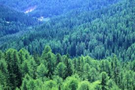 UK Forestry Commission adopts Passfield